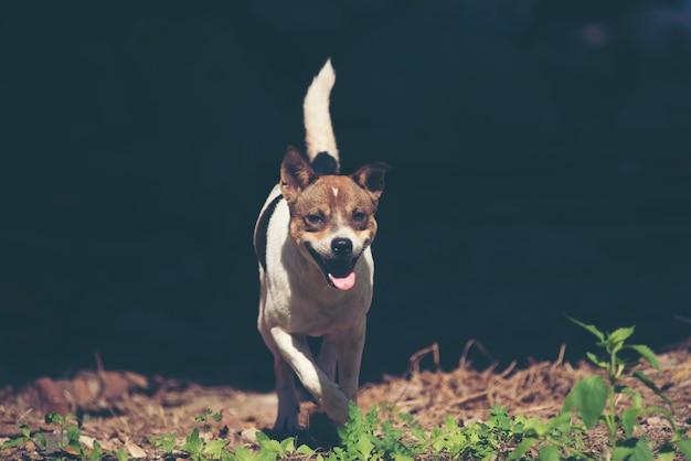 Perro de perritos lindo que se ejecuta en el prado.