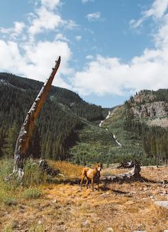 Perro de pie en un campo de hierba seca cerca de un árbol roto con montaña