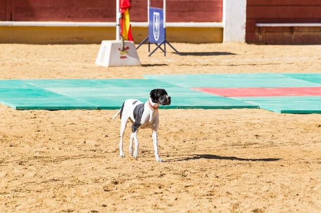 Perro policía entrenado en una exposición de su trabajo.
