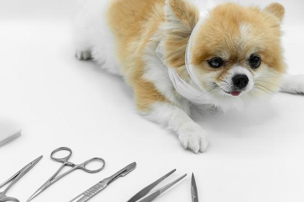 Perro de pomerania sentado en el piso blanco con materiales quirúrgicos borrosos