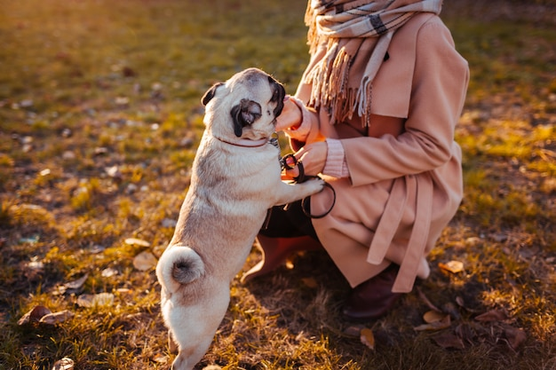 Perro pug. chica caminando perro pug en el parque de otoño. mascota feliz saltando sobre las piernas de la mujer. perro jugando