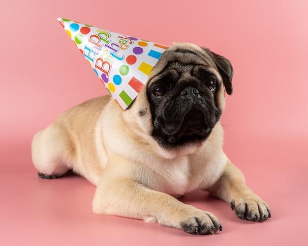 Perro pug divertido con sombrero de feliz cumpleaños sobre fondo rosa.