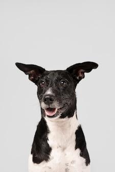 Perro de raza pura siendo lindo en un estudio.