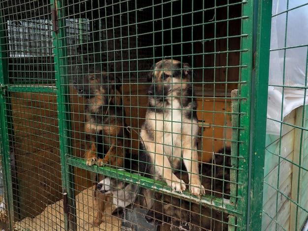 Perro en refugio de animales, perro sin hogar en la jaula