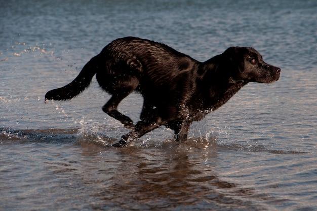 Un perro remando en un poco de agua