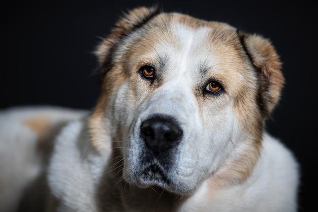 Perro retrato de cerca en la pared oscura