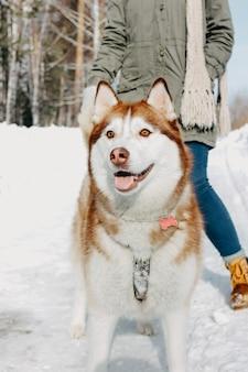 Perro rojo husky con su amante chica morena en el bosque al aire libre en temporada de frío