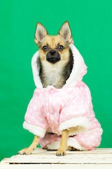 Perro en ropa de invierno