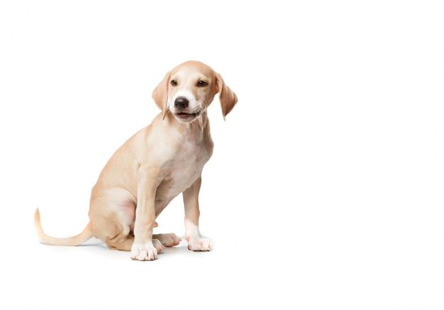 Perro rubio de pelo corto sentado