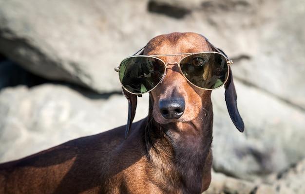 Perro salchicha con gafas de sol en el mar
