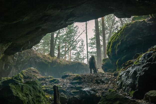 El perro sale de la cueva.