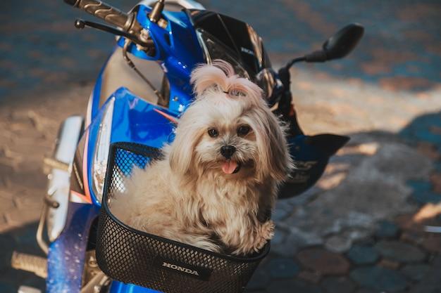 Perro sentado en la cesta de una motocicleta en la calle