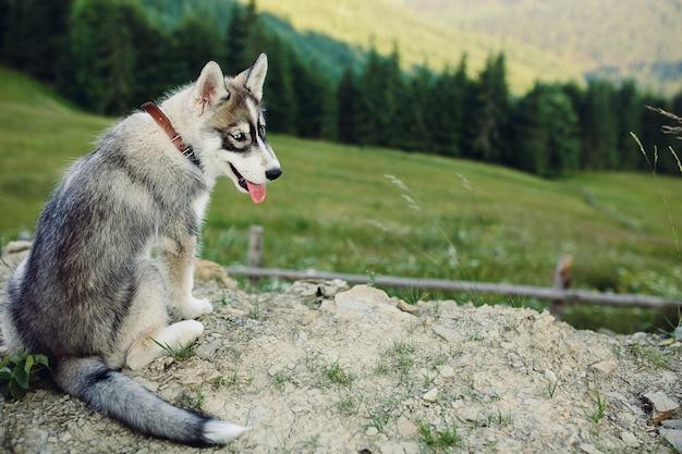 Perro sentado en la colina en el fondo del hermoso paisaje de montaña