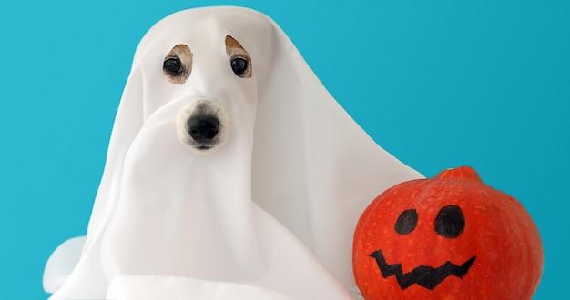 Perro sentado como un fantasma para halloween con calabaza