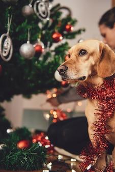 Perro sentado junto al árbol de navidad