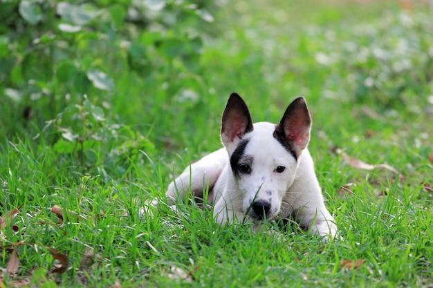 Perro sobre hierba