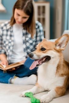 Perro en el sofá con libro de lectura de mujer desenfocada