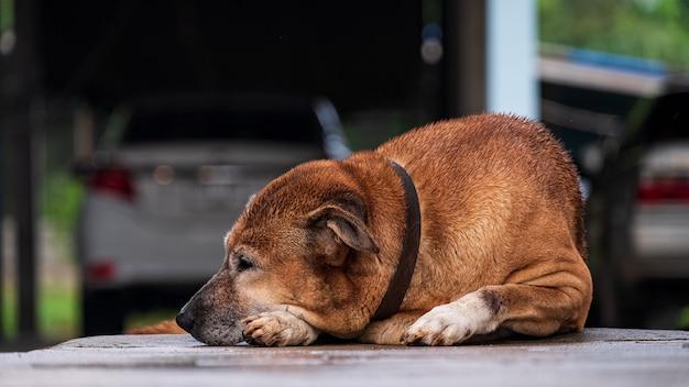 Perro solo durmiendo en casa con tristeza