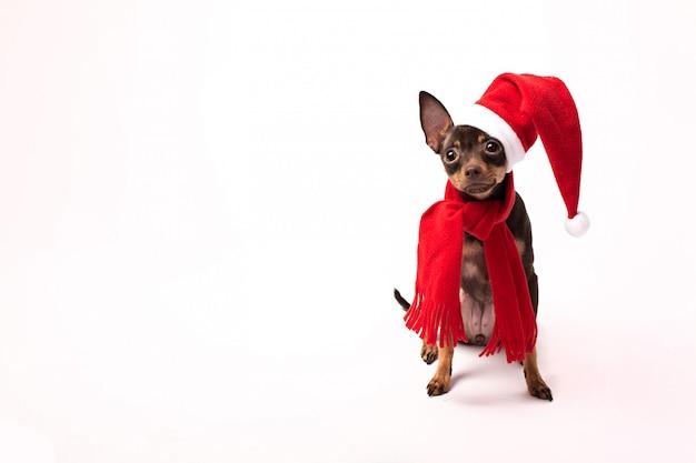 Perro con sombrero de santa y regalos aislados sobre fondo blanco.