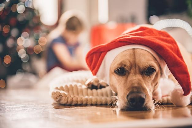 Perro con sombrero de santa tendido sobre la almohada