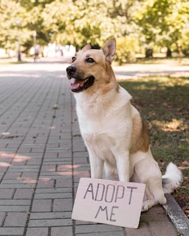 Perro sonriente con adoptar me banner