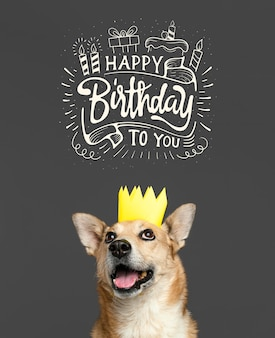 Perro sonriente con corona de papel