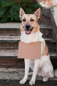 Perro sonriente de pie en las escaleras con banner