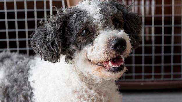 Perro sonriente de primer plano cerca de perreras