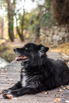 Perro sonriente sentado al aire libre
