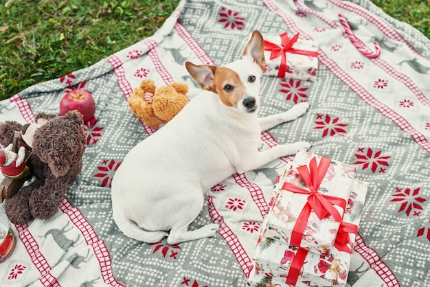 Perro en una tela escocesa con decoración navideña en el fondo de un árbol de navidad