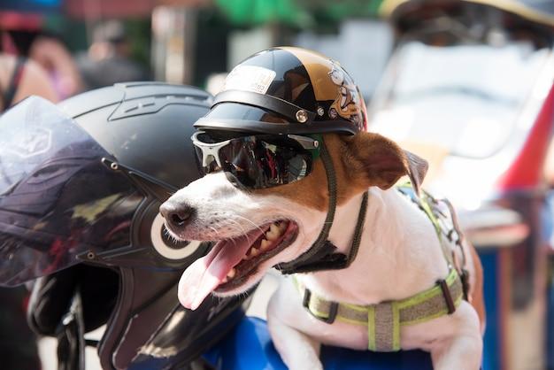 Perro usando un casco