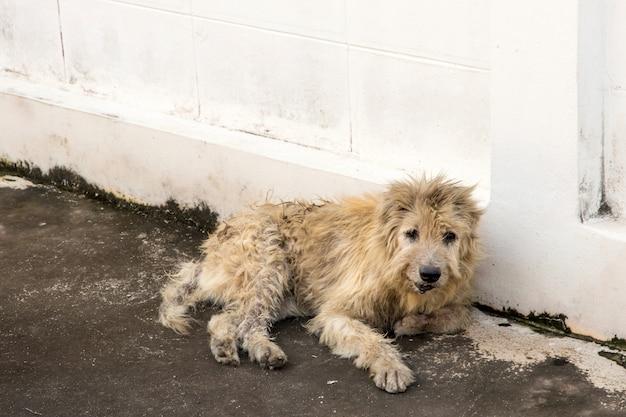 Perro vagabundo en cuclillas afuera mirando mirando a la cámara. el perro mirando al fotógrafo, perro callejero, perro sin hogar