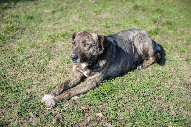 Perro vagabundo sin hogar