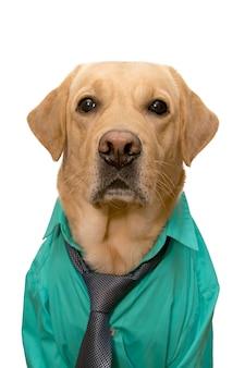 Perro vestido con traje de negocios