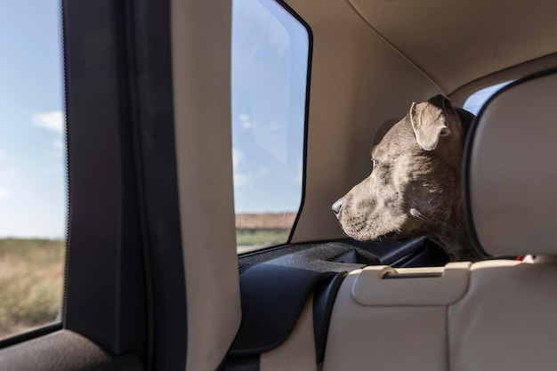 Perro de vista lateral que se aloja en un coche mientras viaja con sus dueños