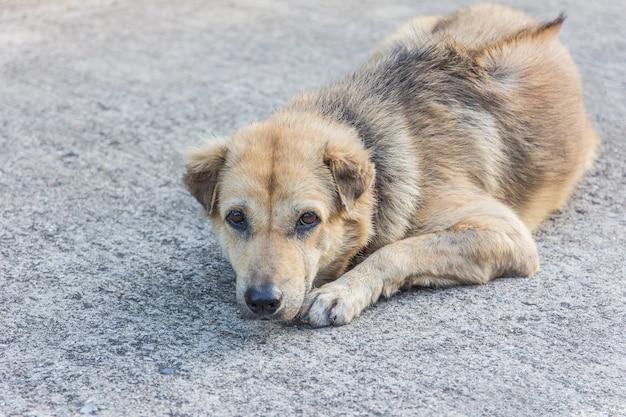 Perros callejeros durmiendo en la calle