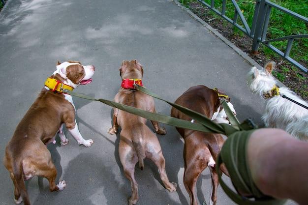 Perros caminando en el parque en collares con correas