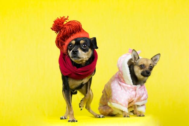 Perros graciosos en ropa de invierno
