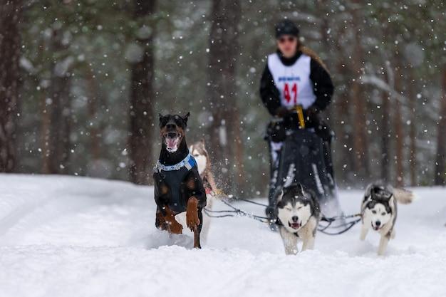 Perros husky tirando de trineo con musher