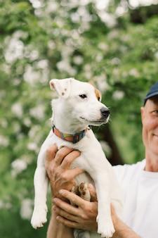 Perros jack russell terrier en la pradera. perros jack russell terrier en la naturaleza.