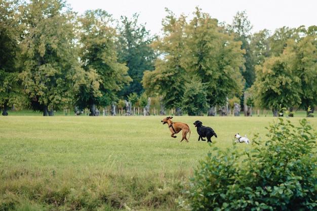 Los perros juegan y corren en la naturaleza.