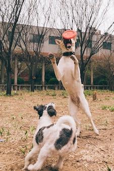 Perros jugando afuera