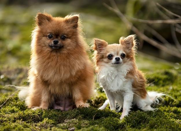 Perros en la naturaleza