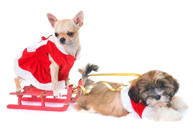 Perros y navidad