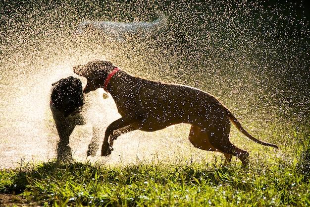 Perros que juegan en el parque echando agua, vista a contraluz