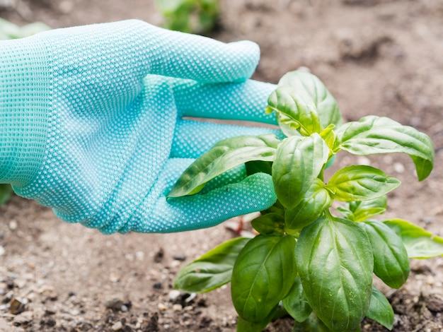 Persona cuidando su planta