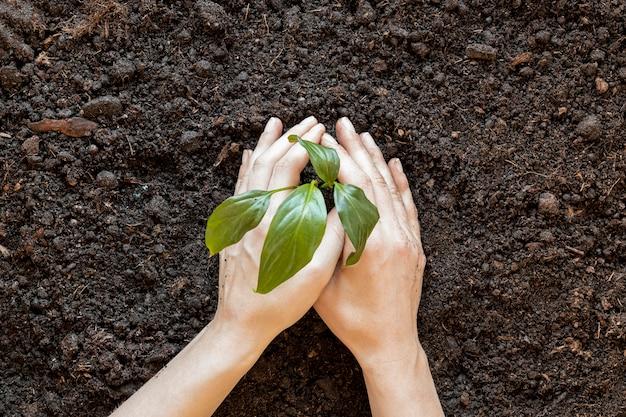 Persona plantando algo en el suelo