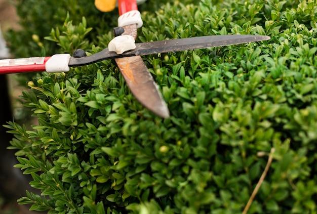 Persona de primer plano con herramienta de recorte en bush
