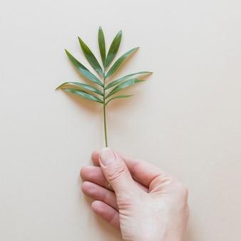 Persona sosteniendo una pequeña planta sobre un fondo beige