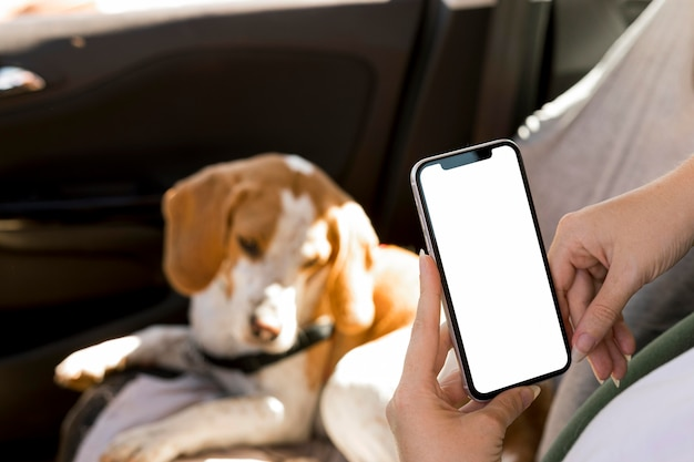 Persona sosteniendo un teléfono móvil y un perro borrosa en segundo plano.